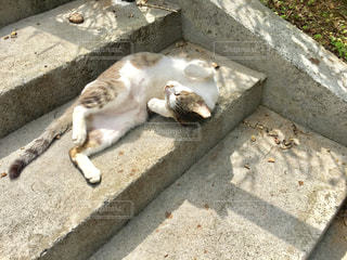 猫 - No.451372
