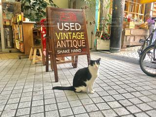 猫の写真・画像素材[462012]