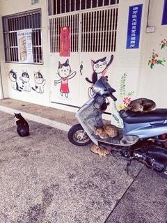 オートバイに座っている猫の写真・画像素材[2743948]