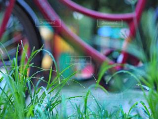 いくつかの草のクローズアップの写真・画像素材[2390325]