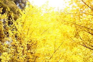 金色の空の写真・画像素材[2428602]