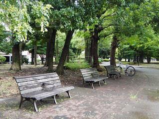 公園のベンチの写真・画像素材[2629676]