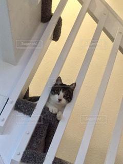 階段からのぞく子猫の写真・画像素材[2773223]