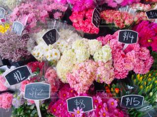 カラフルな花の写真・画像素材[2417179]