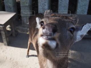 動物をクローズアップするの写真・画像素材[2726061]
