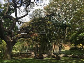 ハワイの公園の写真・画像素材[2395560]