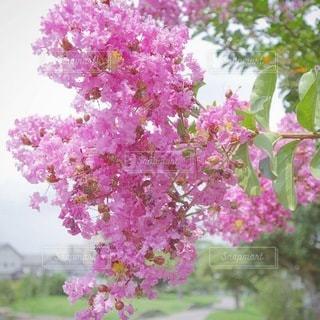 植物の上のピンクの花の写真・画像素材[3489803]