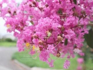 花のクローズアップの写真・画像素材[3569537]