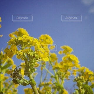 花のクローズアップの写真・画像素材[4048107]