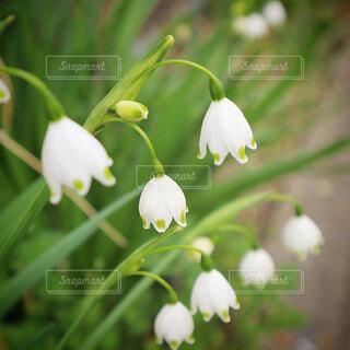 花のクローズアップの写真・画像素材[4227836]