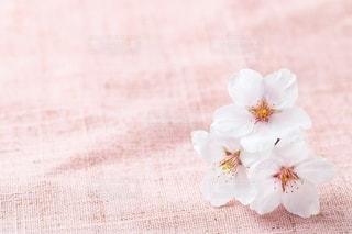 桜の背景素材の写真・画像素材[2392950]