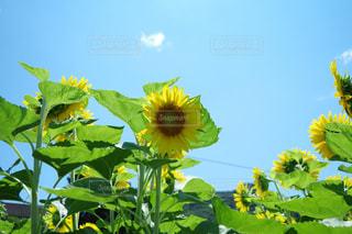夏の写真・画像素材[671016]