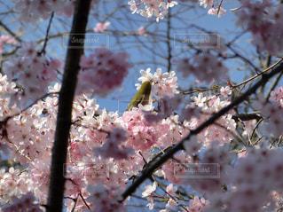 花の写真・画像素材[2395050]