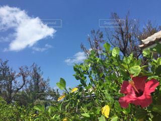 石垣島の写真・画像素材[2395253]