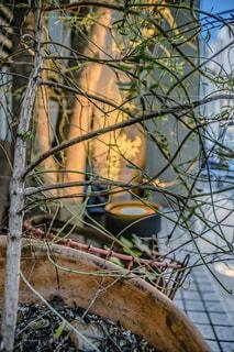 枝に座っている鳥の写真・画像素材[2948675]