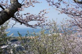 春の写真・画像素材[2412965]