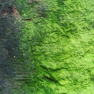 苔の色の写真・画像素材[2396886]