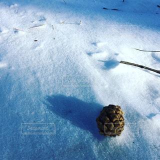 雪と松ぼっくりの写真・画像素材[2396919]