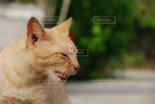 猫 - No.596207