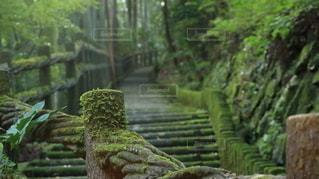 森の中の植物の写真・画像素材[2492364]