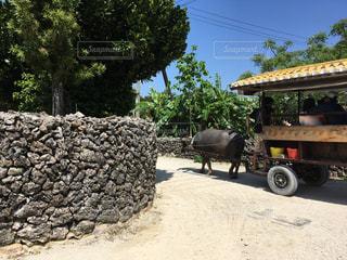 竹富島の水牛車の写真・画像素材[2399606]