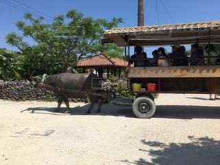竹富島の水牛車の写真・画像素材[2399607]