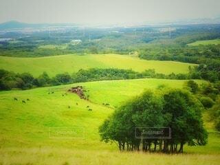 緑豊かな草原で群れる羊の写真・画像素材[4303410]