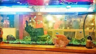 大きな水槽で泳ぐ可愛い熱帯魚の写真・画像素材[4323054]