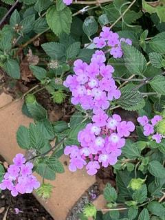 ピンクのかわいい小花の写真・画像素材[2921850]
