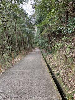 チバニアンに向かう下り坂の写真・画像素材[2926724]