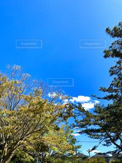 公園の木々の写真・画像素材[3116196]