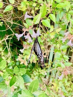 小さな白い花に、アゲハ蝶の写真・画像素材[3522043]