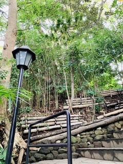 竹藪に沿って延びる階段。の写真・画像素材[3895570]