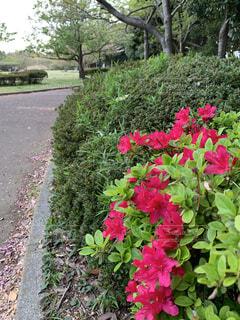 花園のクローズアップの写真・画像素材[4305630]