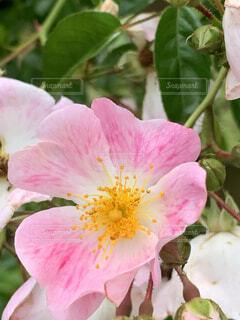 花のクローズアップの写真・画像素材[4458805]