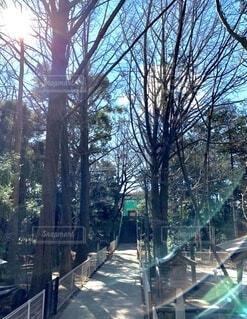 優しい光が差し込む散策路の写真・画像素材[4791108]