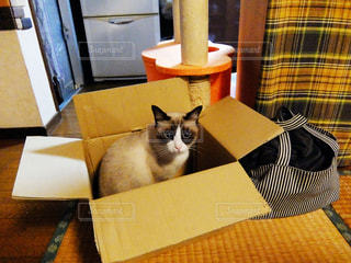 箱に入ってる猫の写真・画像素材[2460347]