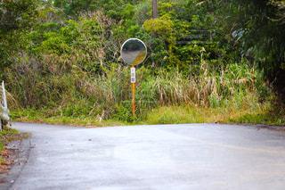 分かれ道の写真・画像素材[2488940]
