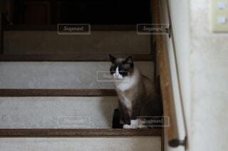 階段に座ってる静かな猫の写真・画像素材[4818138]