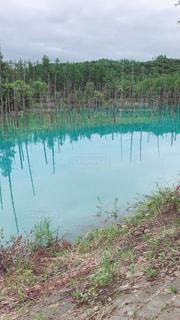 美瑛の青い池の写真・画像素材[2399501]