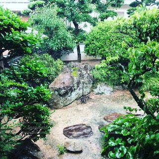 雨の日の庭の写真・画像素材[2681368]