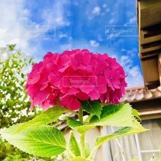 植物のクローズアップの写真・画像素材[2681455]