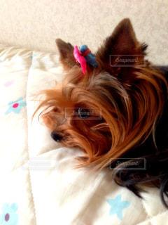 犬の写真・画像素材[126632]