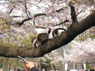 猫の写真・画像素材[126641]