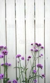 紫色の花 白い木目背景の写真・画像素材[2424054]