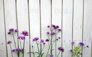 紫色の花でいっぱいの花瓶の写真・画像素材[2424055]