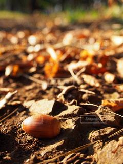 秋の風景イメージの写真・画像素材[2506258]