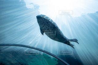水の上を飛ぶ鳥の写真・画像素材[2425043]