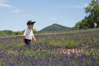 草に覆われた野原の上に立っている人の写真・画像素材[2497366]