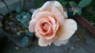 花のクローズアップの写真・画像素材[2493933]